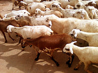 Animal husbandry in India - Wikipedia