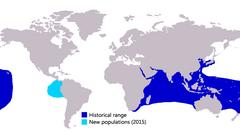 Phạm vi phân bố cá vẩu