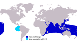Caranx ignobilis distribution.png