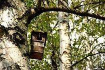 Casetta per uccelli.jpg
