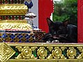 Cat in Repose at Temple - Bangkok - Thailand (34672560376).jpg