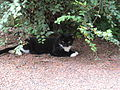 Cat in yard of Tullie Smith House.JPG