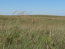Green and yellow prairie grasses adorn a hill