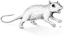 Drawing of Catopsbaatar, resembling a squirrel