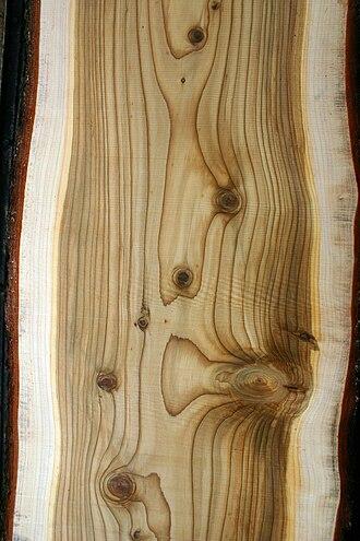 Cedrus deodara - Wood of Cedrus deodara.