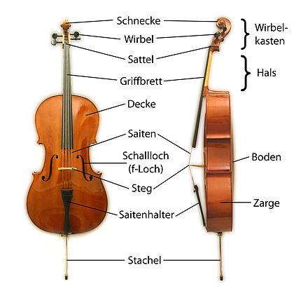 Unterschied Cello Kontrabass