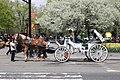 Central Park NewYork21.jpg