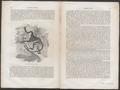 Cercopithecus diana - 1700-1880 - Print - Iconographia Zoologica - Special Collections University of Amsterdam - UBA01 IZ19900147.tif