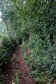 Chemin, Guillac, France.jpg