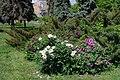 Cherkasy Yunist Park 71-101-5003 SAM 7158.jpg