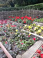 Chester Zoo Flower Beds.jpg