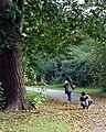 Chestnut Roasting Time - geograph.org.uk - 584800.jpg