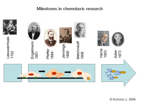Milestones in chemotaxis research