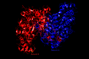 Citrate synthase - The Active Site of Citrate Synthase (open form)