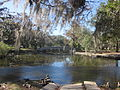 City Park 12-12-12 Thomas Day Bridge Spanish Moss.jpg