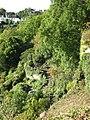 Cliff garden - geograph.org.uk - 1512734.jpg