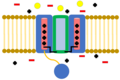 Closed Voltage-gated Ion Channel.png