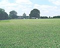 Clover field near the Tickerage stream - geograph.org.uk - 35022.jpg