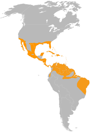 Common ground dove - Image: Columbina passerina distribution map