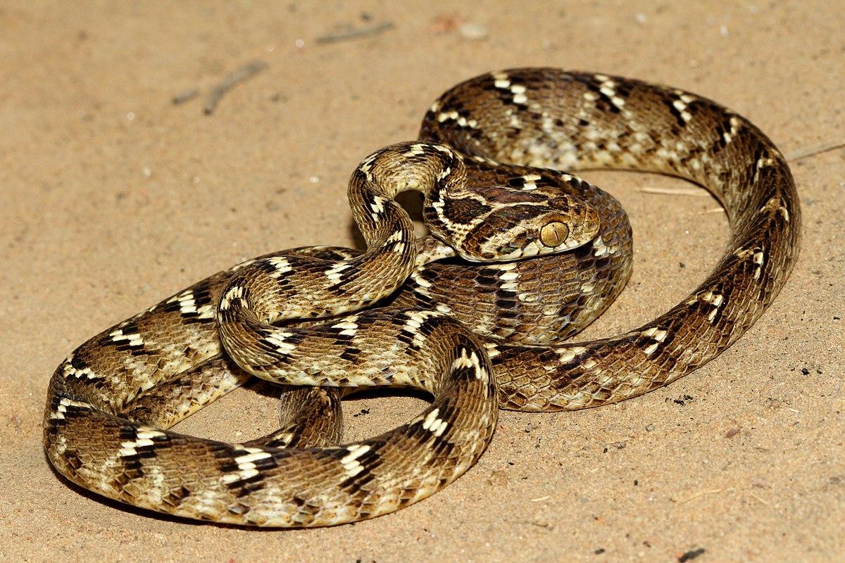snake - photo #11