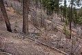 Continental Divide Trail - Flickr - aspidoscelis (46).jpg