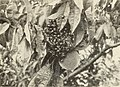 Control of the Japanese beetle on fruit and shade trees (1936) (20665899326).jpg