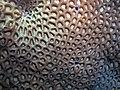 Coral patterns (6163172203).jpg