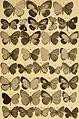 """Correspondenz-blatt des Entomologischen Vereins """"Iris"""" zu Dresden (1884) (20077701904).jpg"""