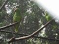 Costa Rica (6094716622).jpg