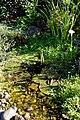 Cottage garden pond at Boreham, Essex, England.jpg