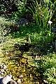 Cottage garden pond at Boreham, Essex, England.jpg