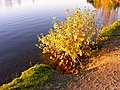 Couleurs d'automne - panoramio.jpg