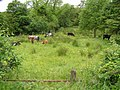 Cranny Townland - geograph.org.uk - 1363634.jpg