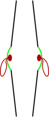A pair of clash cymbals in profile. The bell is in green and the straps are in red.