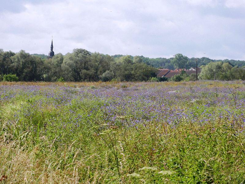 Croismare (M-et-M) paysage, vue sur village