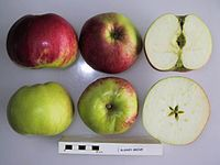 Cross section of Bushey Grove, National Fruit Collection (acc. 1924-057).jpg