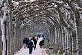 Crossing Trees - Arboles Cruzados.jpg