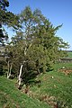 Crowrie Stripe - geograph.org.uk - 415087.jpg