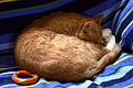 Curled (1257657135).jpg