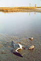 DEAD BIRD IN POLLUTED WATER - NARA - 546241.jpg