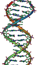DNA Overview2 crop.png