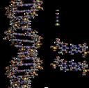DNA Structure+Key+Labelled.pn NoBB