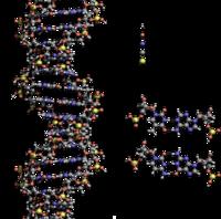 脱氧核糖核酸
