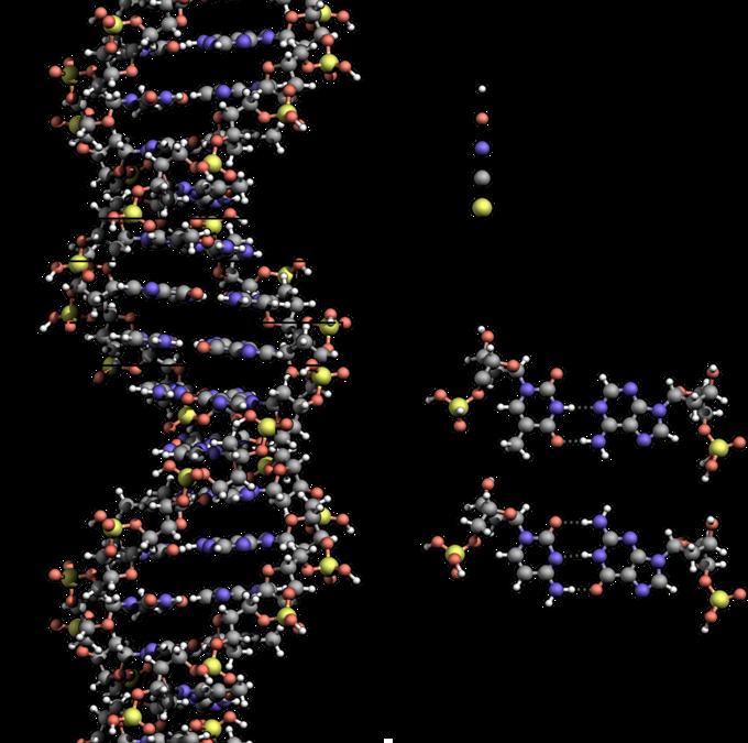 Visual of a DNA molecule