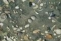 DOC Fairy Tern photos 13.jpg