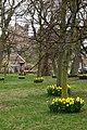 Daffodils in Bamburgh - geograph.org.uk - 728187.jpg