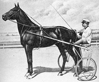 Standardbred - Dan Patch, significant Standardbred pacing sire, circa 1900