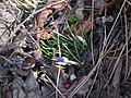 De forst sprig fluvers^ . vrom, 20011 - panoramio.jpg