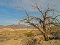 Death Valley (2187130303).jpg