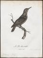 Dendropicus menstruus - 1796-1808 - Print - Iconographia Zoologica - Special Collections University of Amsterdam - UBA01 IZ18700191.tif